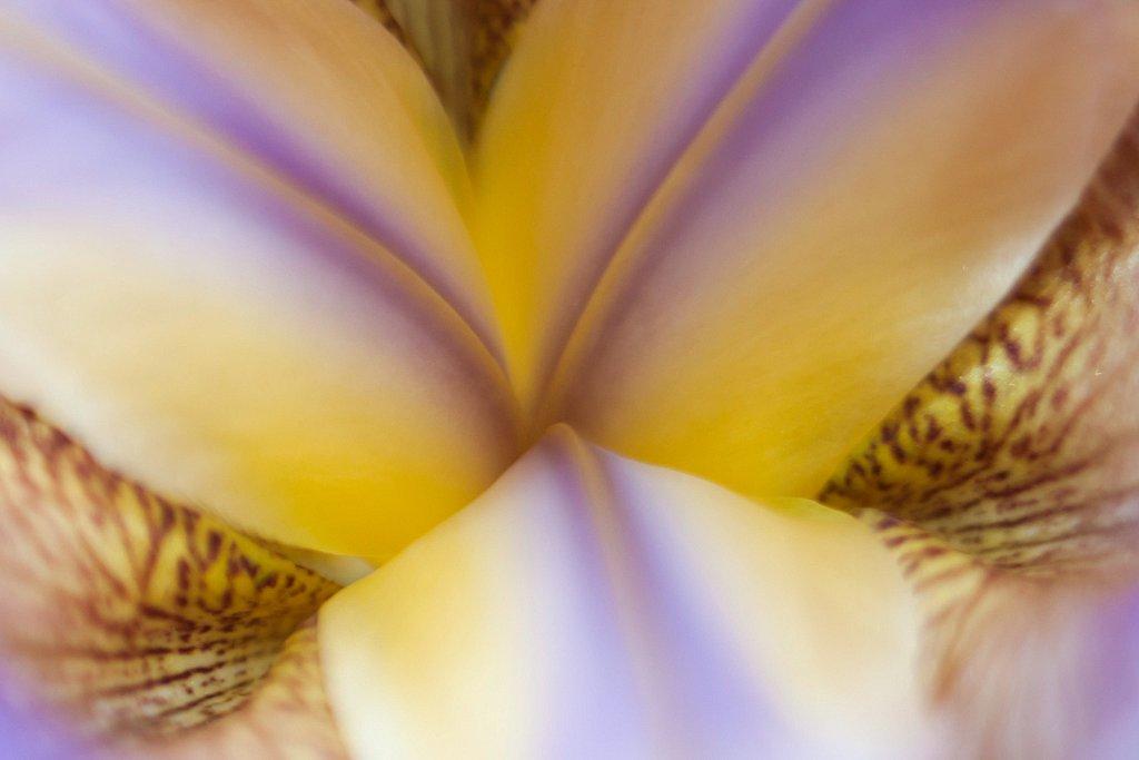 Coeur de l'iris
