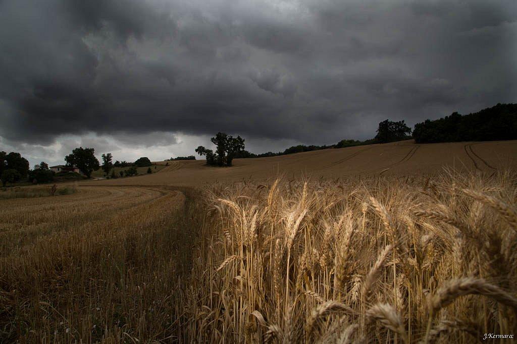Orage sur les blés