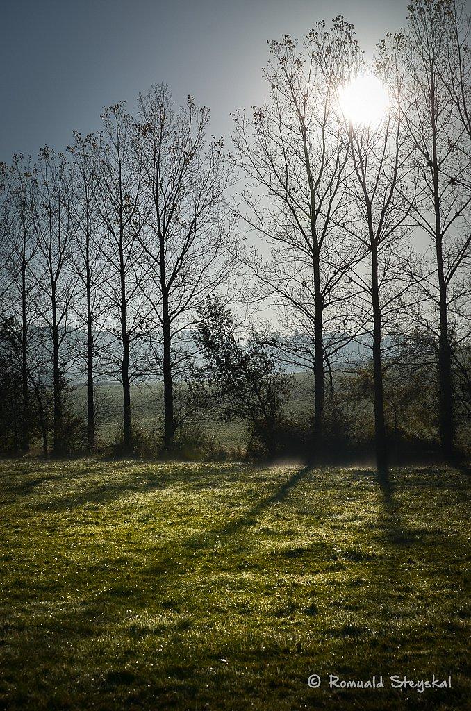 L'ombre des peupliers