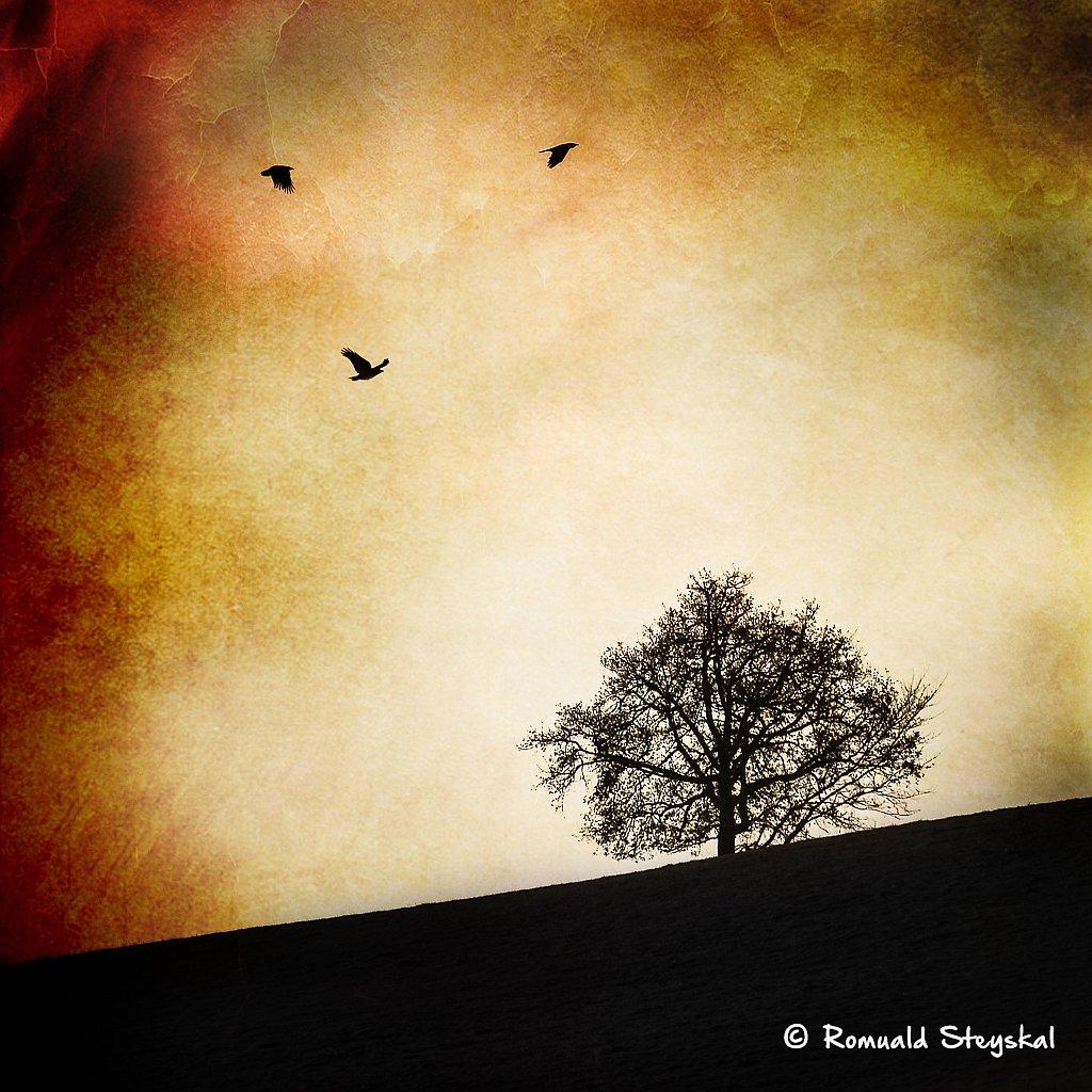 L'arbre aux corbeaux