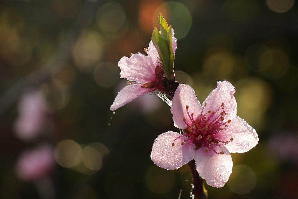 Délicatesse à fleur d'eau