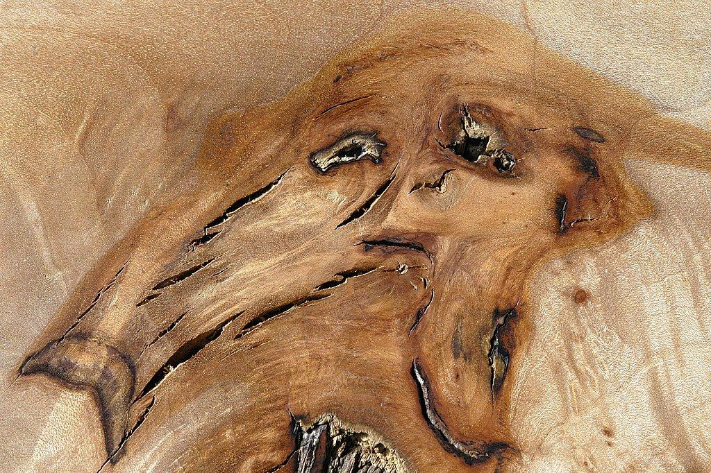 Le fantôme des bois