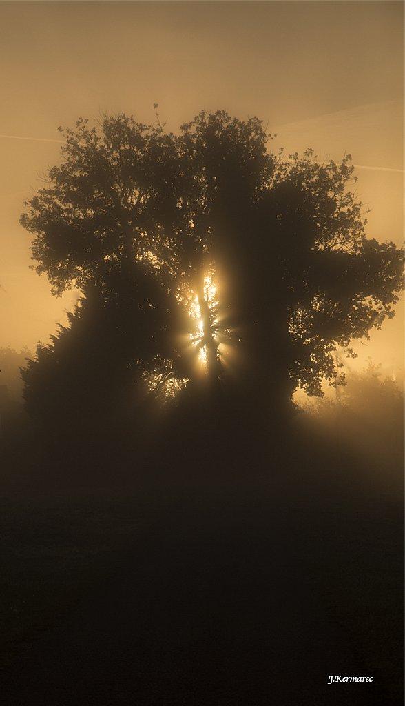 L'arbre en feu