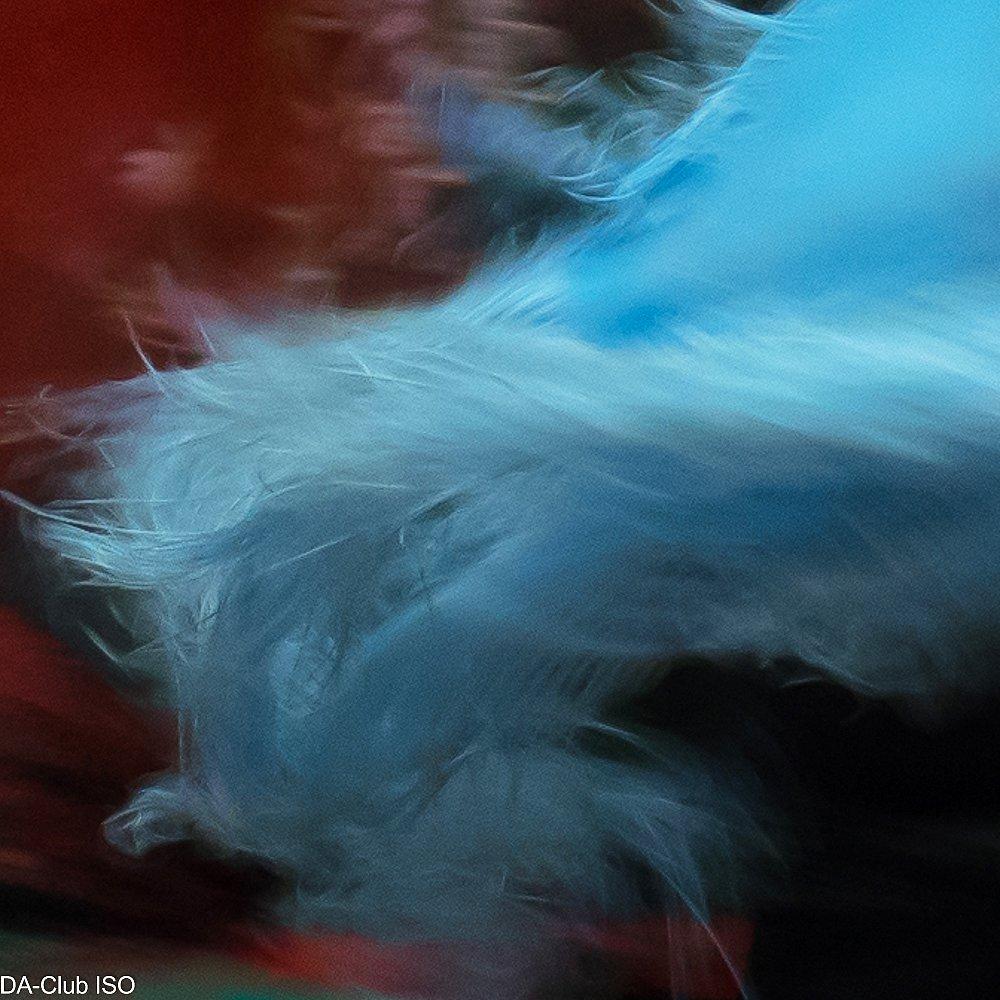 Flamenco plume